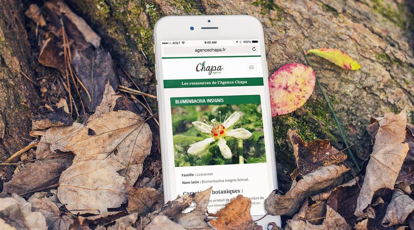 Ambiance du site Internet de l'Agence Chapa